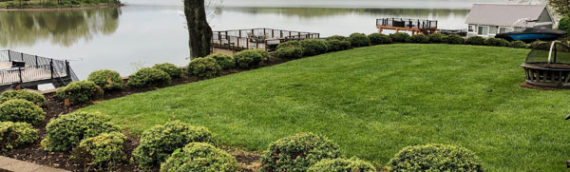 Landscaping Claytor Lake lawn – BEFORE